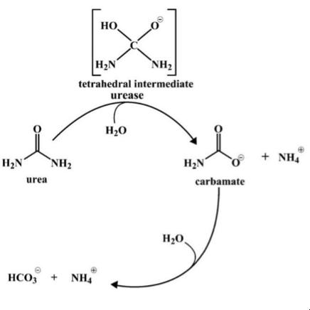 Chem1_Passage4_Reaction1